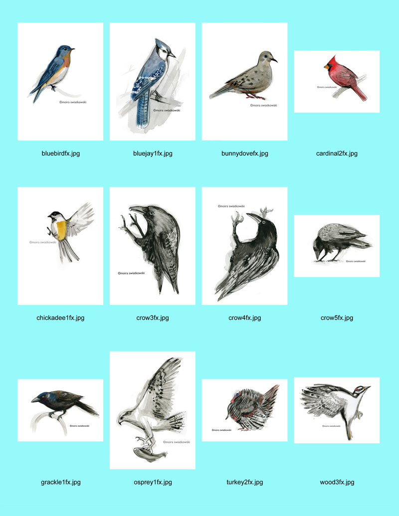 bird contact page